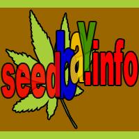 newsy sklepu z nasionami konopi, cannabis