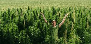 marihuana-lecznicza-medyczna-mezczyzna-uprawa-marihuany-300x147