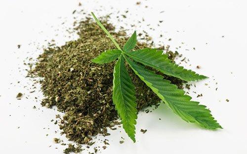 olej-konopny-marihuana-lisc-konopia2