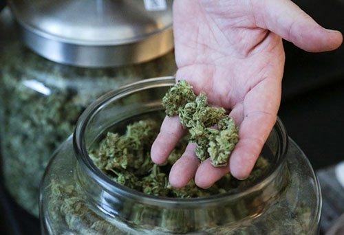 sklep z marihuaną