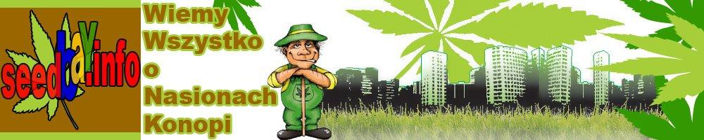 SeedBay – Nasiona Marihuany, Aktualności, Newsy, Blog