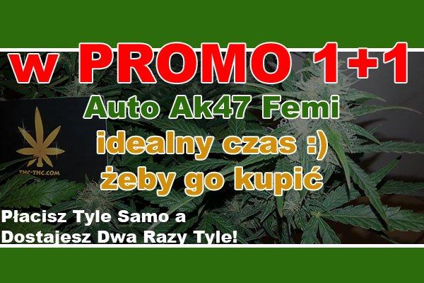 nasiona, marihuany, konopi, auto, ak47, seedbay