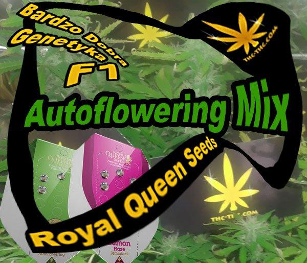 nasiona marihuany, konopi, autoflowering, mix, royal queen