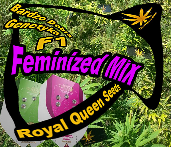 nasiona, marihuany, konopi, feminized, mix, royal, queen, seeds