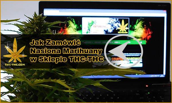 nasiona marihuany, nasiona konopi, jak zamówić, na thc-thc