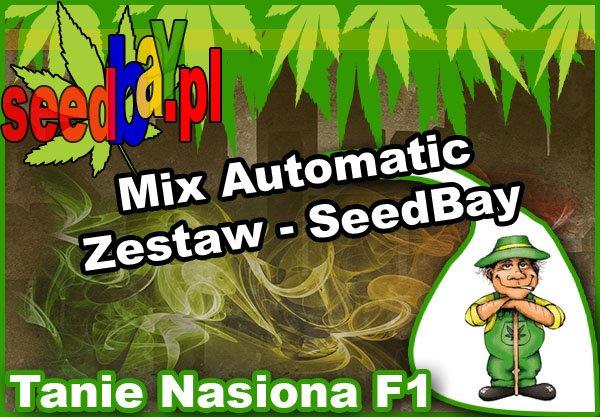nasiona, marihuany, konopi, feminizowane, mix, automatic, seedbay