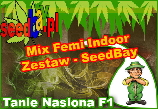 nasiona, marihuany, konopi, feminizowane, mix, indoor, seedbay