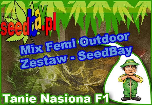 nasiona, marihuany, konopi, feminizowane, mix, outdoor, seedbay