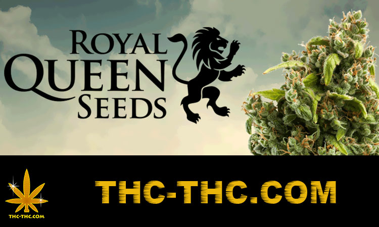 nasiona, marihuany, konopi, feminizowane, automatic, Royal Queen
