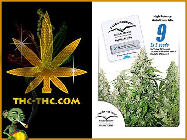 nasiona marihuany, nasiona konopi, high potency autoflower mix, feminizowane, dutch passion