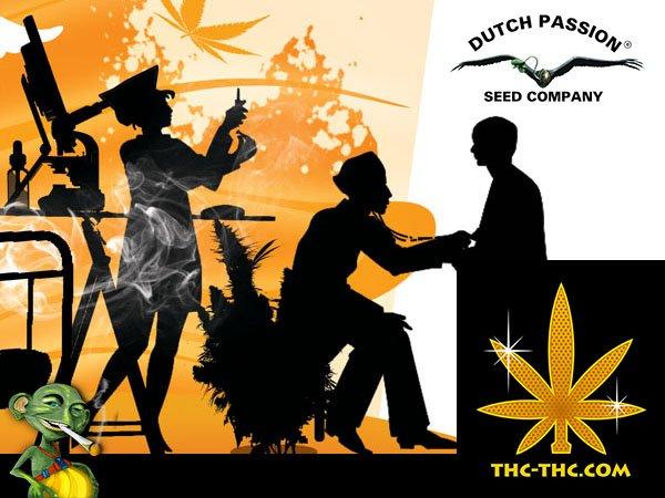 medyczna marihuana, cbd, auto, dutch passion