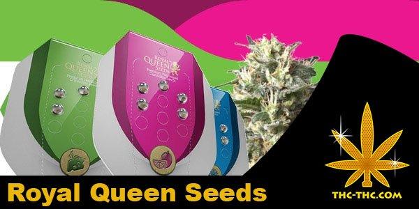 nasiona marihuany, konopi, royal queen seeds