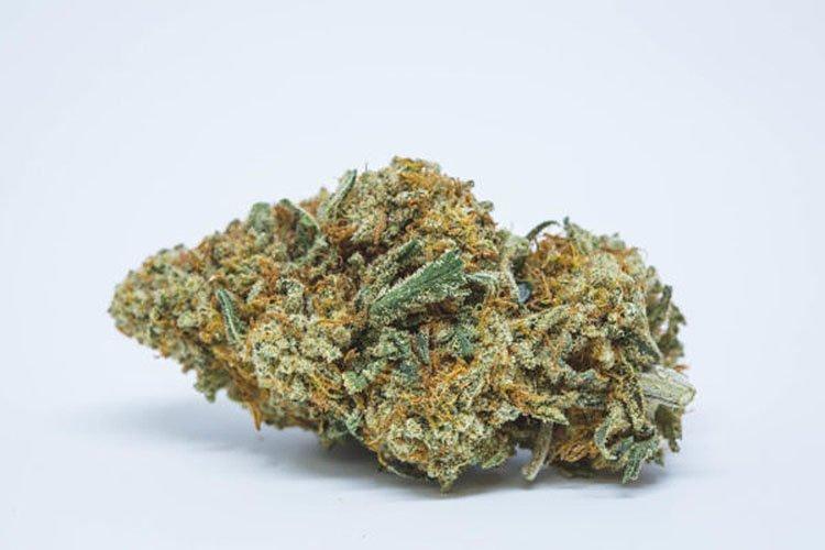 Nasiona Konopi, Nasiona Marihuany, Recenzja Odmiany, Pineapple Kush