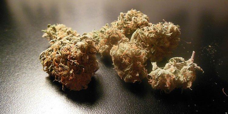 Nasiona Konopi, Nasiona Marihuany, Recenzja Odmiany, Super Lemon Haze